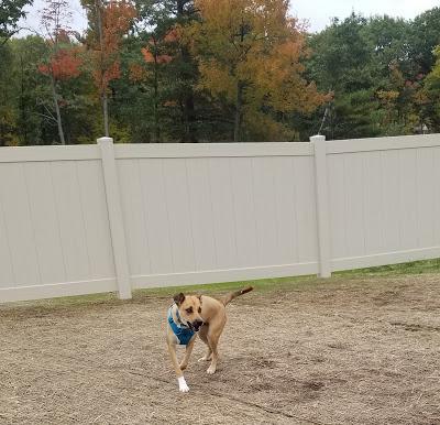 Jake @ the Dog Park