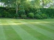Tips Caring Your Lawn