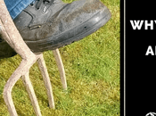 Should Aerate Your Lawn