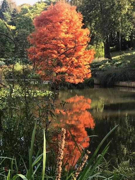Autumn Treasures at the Sir Harold Hillier Gardens