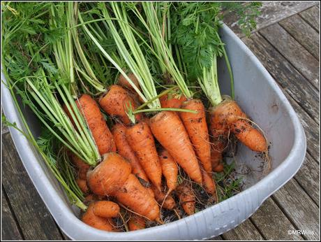 Carrots out and Endives in