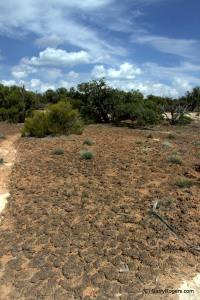 Controlling Invasive Weeds in Deserts: Strategic Concepts