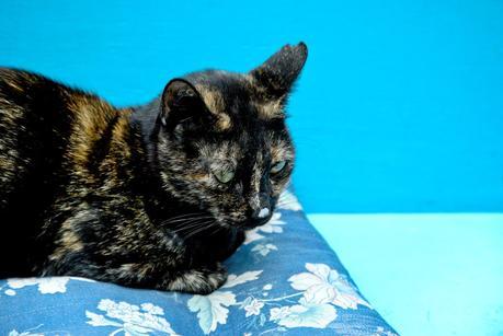 cats of dubrovnik, cat garden old town,