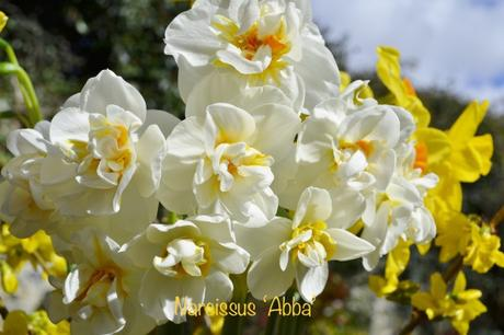 Learning with Experts – Bulbs for Pots and Borders (1)