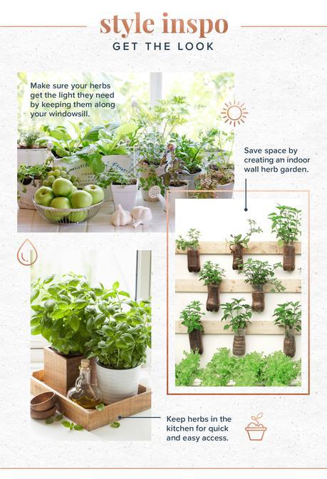 Image: indoor herb garden styling tips