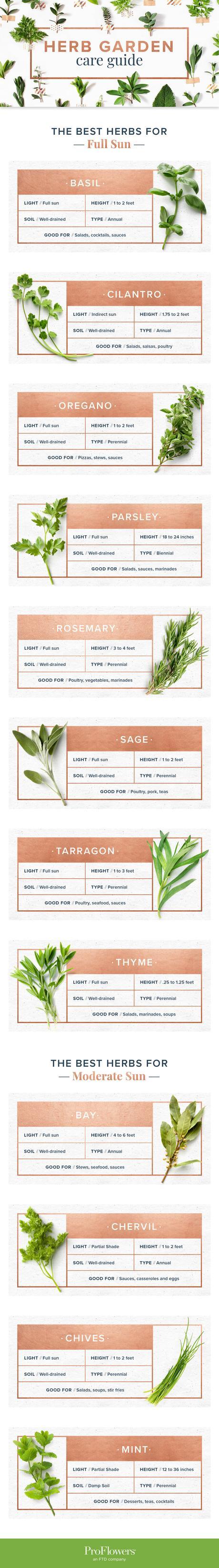 Image: indoor herb garden care guide