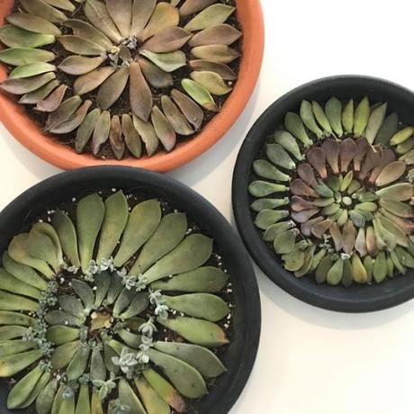 Jessy's Succulent Gardening Experience