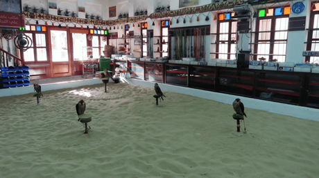 Falcons, Falconry and Falcon souq – a unique experience in Doha, Qatar