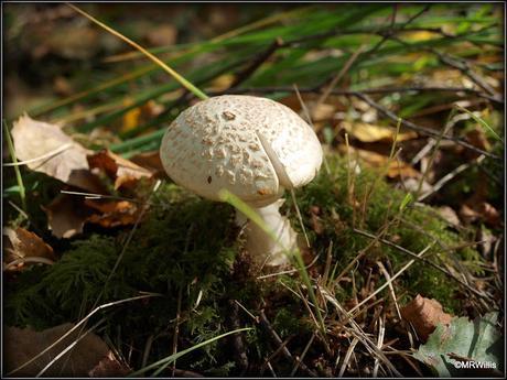 Fungi hunting