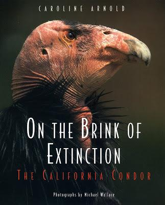 California Condor Release at Vermilion Cliffs in Arizona