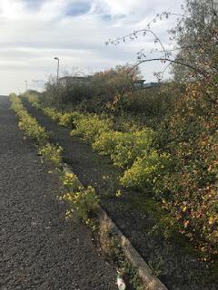 A Midlands Highline