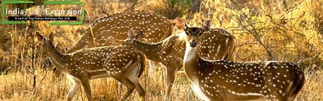Top 4 Wildlife National Parks/sanctuary in Rajasthan