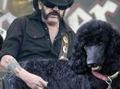 Pictures Worlds Greatest Bass Players Playing Dogs