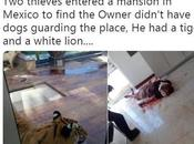 Armed Robbers Storms Man's Home Guarded Tiger, What Happened Next (Photos)