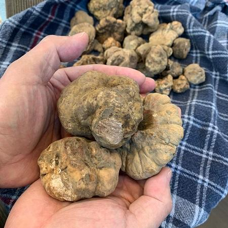 Enjoy Precious White Truffle Delicacies at Paper Moon this Fall