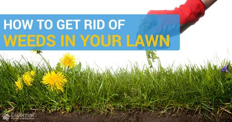 16 Ways to Get Rid of Weeds in Your Lawn
