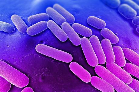 Herbal Remedies for Klebsiella Species Bacteria – UTI
