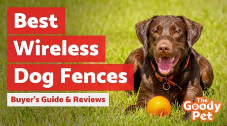 Can a Wireless Dog Fence Keep Your Dog Safe?