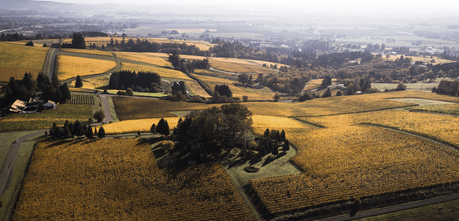 The Family Coppola Acquires Vista Hills Vineyard in Oregon's Dundee Hills. Image courtesy Vista Hill Vineyard.