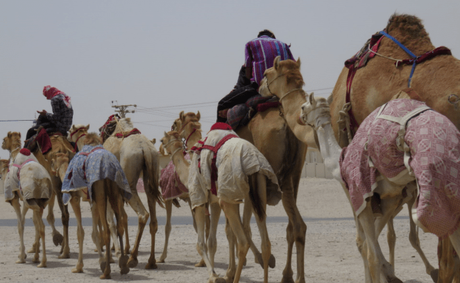 Qatar: of pearling centres, fishing villages, camel racing and ghost towns