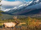 Best Hunting States U.S.