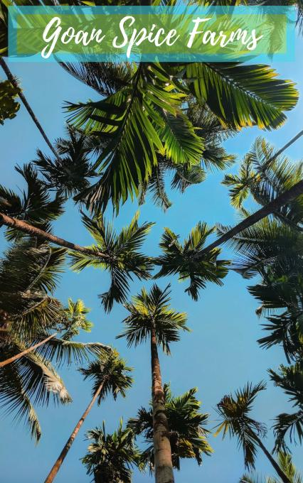 Postcards From A Goan Affair