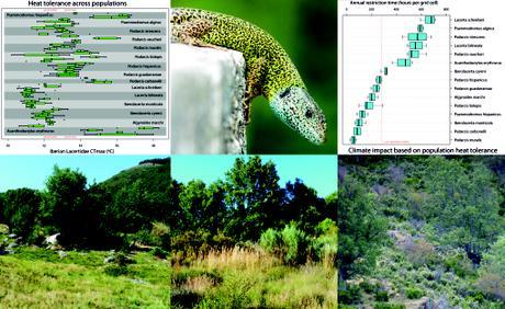 Ecophysiological feedbacks under climate change