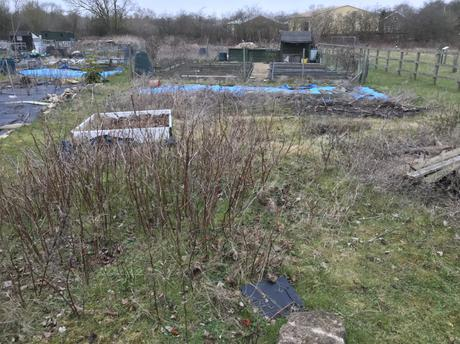 Back To The Magical World Of Allotments