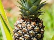 Give Baby Pineapple?