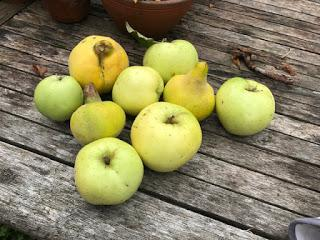Tree Following November 2018 - Quince Crumble