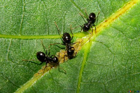 Dealing with Ants On Your Property