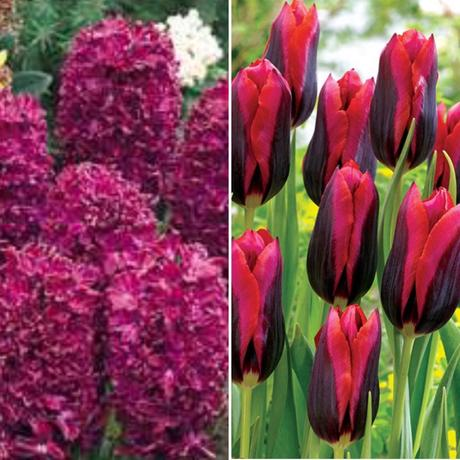 Adding colour to beds and borders by planting flowerbulbs