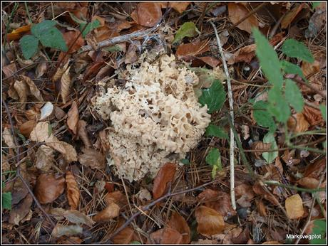 Top 10 easy-to-identify edible mushrooms