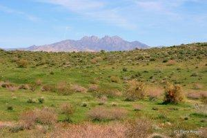 Prioritizing Weed Species and Sites in Deserts