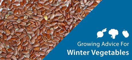 Winter Vegetables Growing Guide