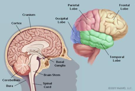 Criminal Mischief: Episode #09: The Mysterious Human Brain