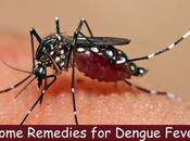 Prevent Treat Dengue with Home Remedies