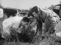Oscar Got It Wrong!: Best Original Screenplay 1951