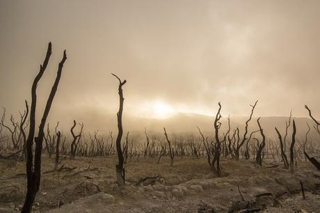 dead-trees-dry-deserted-dead-wood-climate