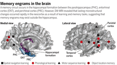 Watching memories change the brain - a challenge to the traditional view
