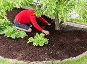 Easy Ways Ensure Clean Lawn Year Long