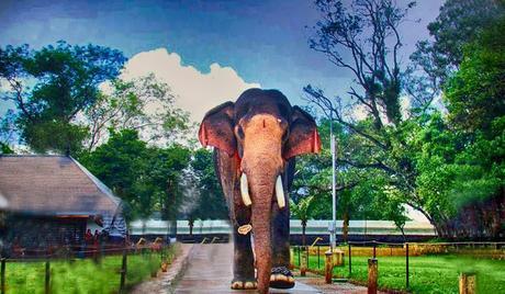 Notable-elephants-reserve-at-Kerala