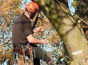 Reasons Need Tree Survey
