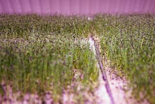 Growing Underground in Clapham Common