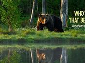 That Bear?