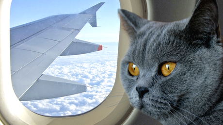 How to Fly with Severe Pet Allergies2 min read
