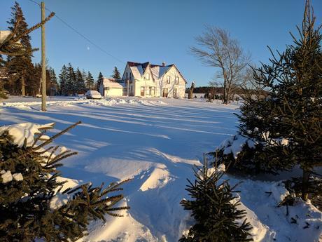 Snowy Snapshots