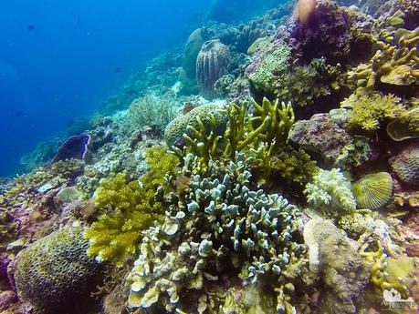 Dakit-dakit Dive Site
