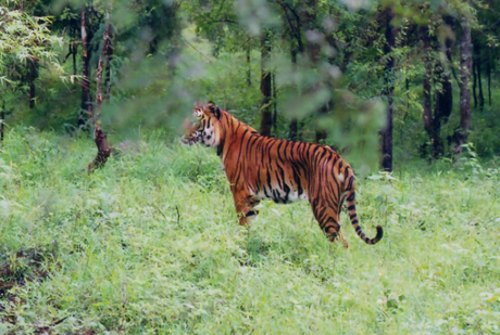 Discover the Wildlife of Karnataka on These Exciting Road Trips