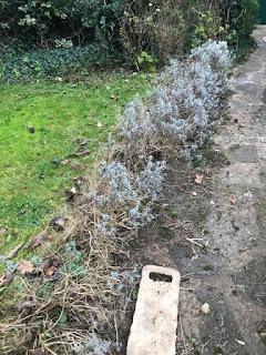 So goodbye lavender edge......